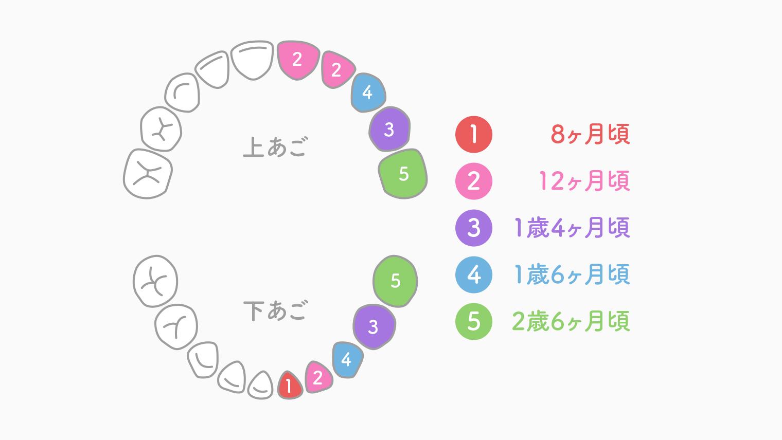 乳歯の生える時期・永久歯への生え変わり時期や順番は?